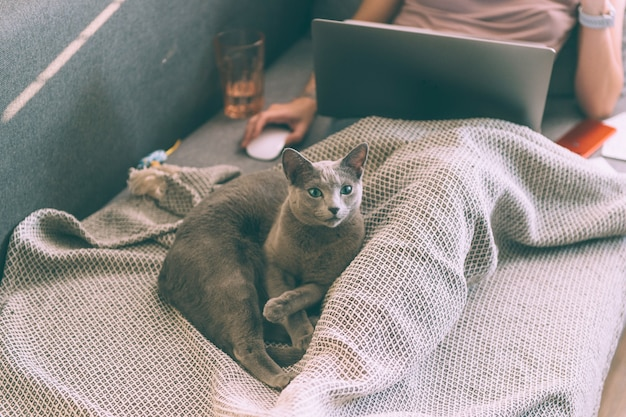 自分の足でベッドに横になっている美しい子猫