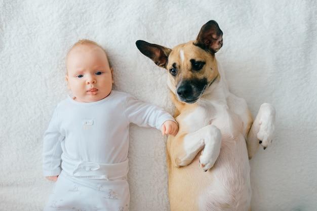 生まれたばかりの赤ちゃんのライフスタイルソフトフォーカスの肖像画は、ベージュのカバーに面白い子犬と一緒に背中に横たわっています。愛らしいカップルの友情。自宅で犬と一緒にリラックスできる素敵な小さな男性の子。看護赤ちゃんのペット。