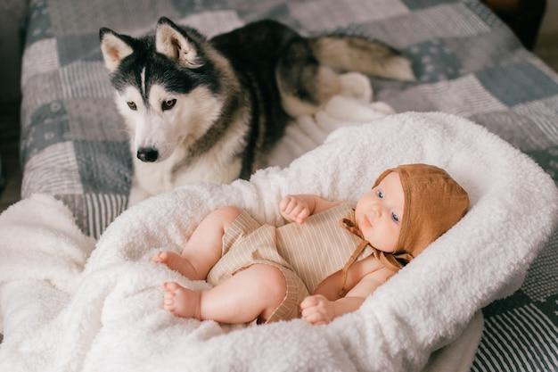 ハスキーと一緒にベッドの上のベビーカーで横になっている生まれたばかりの赤ちゃんのライフスタイルの肖像画。小さな子供と素敵なハスキー犬の友情。ペットと一緒に寝ている愛らしい面白い子