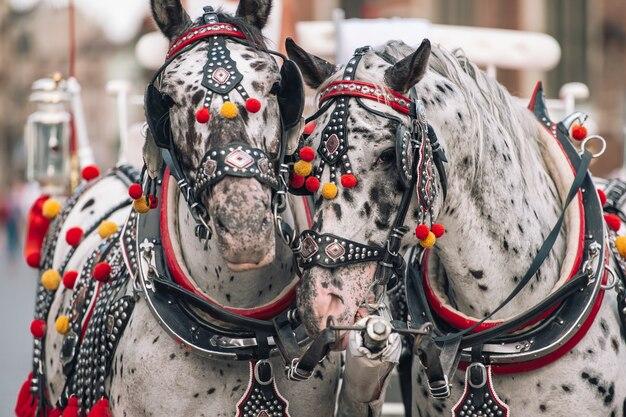 馬車で観光客に乗るための装飾された馬