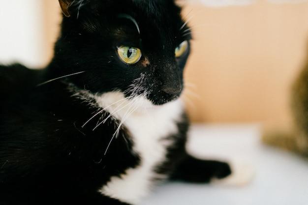 テーブルの上に横たわる面白い猫銃口のクローズアップの肖像画。