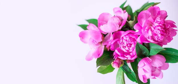 Цветущие розовые пионы