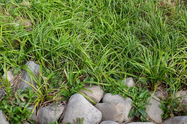 エリアは草と灰色の石で覆われています。