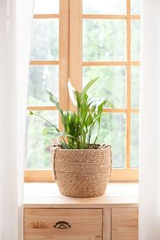 ストローポットのスパティフィラムホーム植物は窓辺に立っています。窓辺の家の植物。ホームガーデニングのコンセプト。自宅の窓辺に植木鉢のスパティフィラム。スカンジナビア。