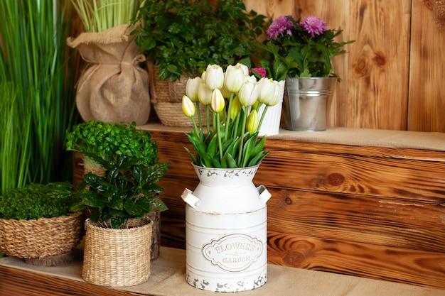 バスケットのブーケホワイトチューリップの花。春の庭のインテリア。素朴なテラス。植物と植木鉢のクローズアップ。庭で育つ若い植物。春の装飾、バスケットのチューリップ。コーヒー工場