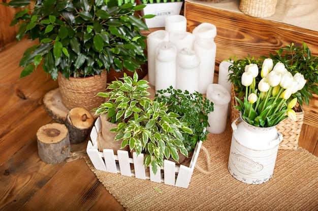 別の鍋でさまざまな家の植物のコレクション。自宅の鉢植え。木製の床の鉢植えの植物。緑の観葉植物とアレンジメント籐植木鉢。フィカスベンジャミナ、自然な素朴なスタイル