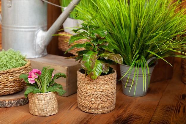 木製の床にストローポットのクロトン観葉植物。別の鍋でさまざまな家の植物のコレクション。
