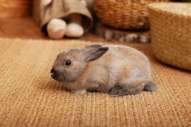 かわいい赤ちゃんバニーが暖かい色調のストローカーペットの横でリラックスします。家の装飾的なウサギ。