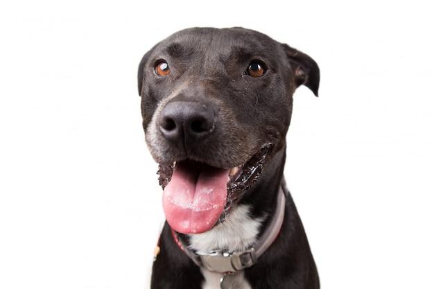 Очаровательны черная собака, глядя на камеру на белом