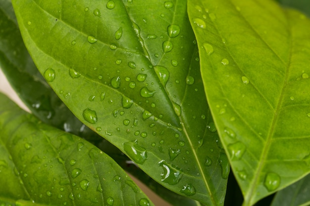 Капли дождя на зеленых листьях крупным планом