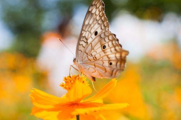 黄色の花を蝶します。