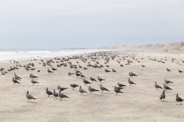 カモメの完全なビーチ