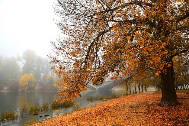 霧の朝の秋の遊歩道。明るい秋の背景。