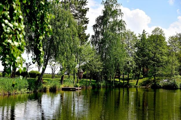 木々は公園の湖に映っています。夏の背景。
