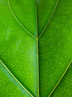 緑の葉の背景を閉じる