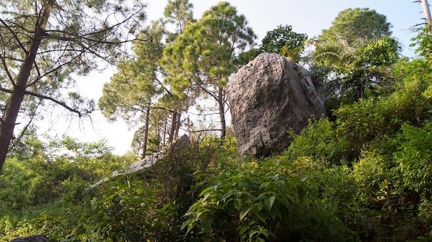 緑の風景写真のロック