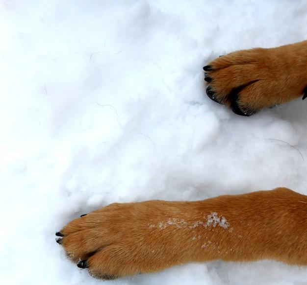 Ноги и ноги собаки в снегу