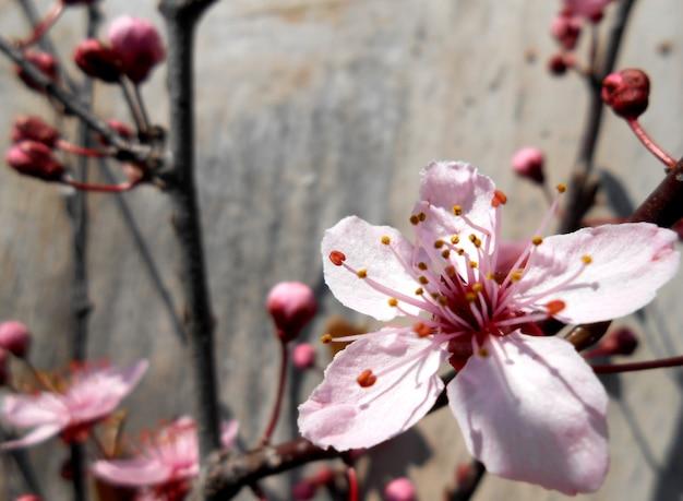 木製の背景にピンクのフローラル
