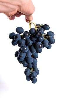 白い背景で隔離の水の滴を黒ブドウ