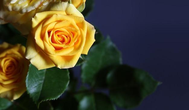 Свежий желто оранжевый розы крупным планом на темной поверхности. скопируйте место для текста