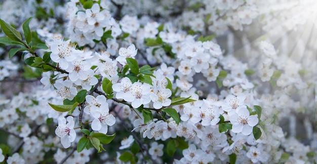 庭の春の花。バナー