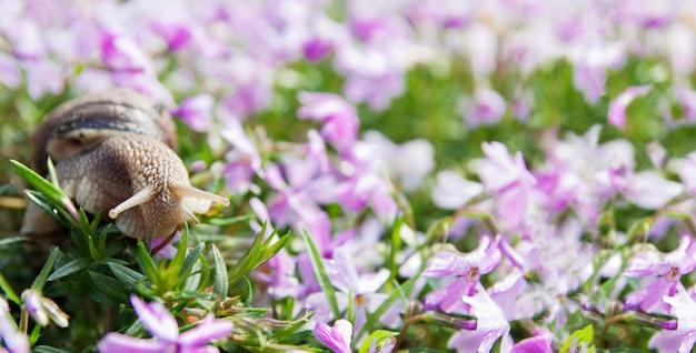 花の草原のカタツムリ。自然の中で美しい春、夏。バナー