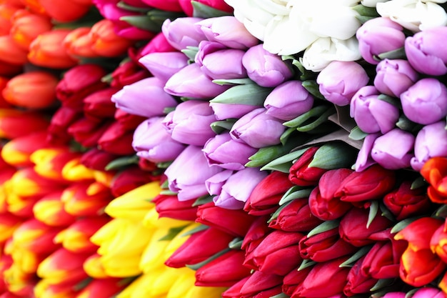 さまざまな種類のチューリップ、明るい春の花