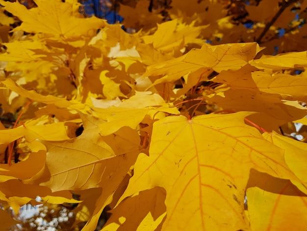 落ちたもみじと秋の自然販売の背景