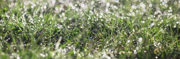 昇る太陽の光線で緑の草原草の芝生の背景