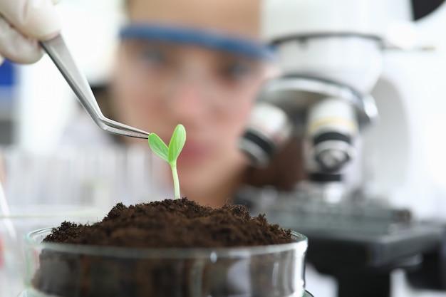 Крупный план в лаборатории стоит росток в земле