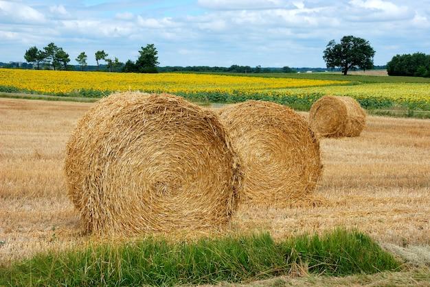 Тюки соломы круглые на убранных полях во франции