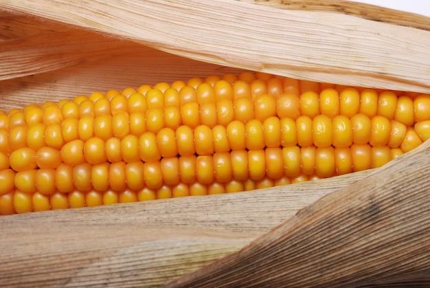 Колос спелой кукурузы во франции
