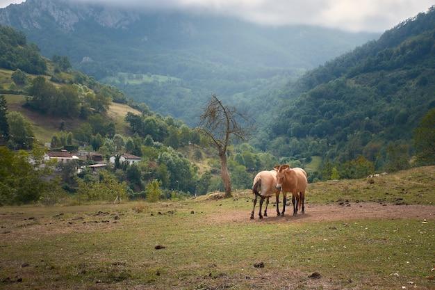Лошади в горах