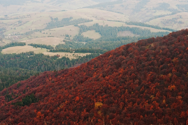 山の赤い木の森の風景
