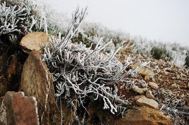 山の岩に凍った草を閉じます。