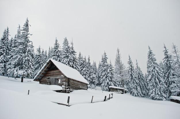 チョミアック山、カルパティア山脈、ウクライナ、霜の自然の美しい冬の風景に雪で覆われた松の木の木造住宅、