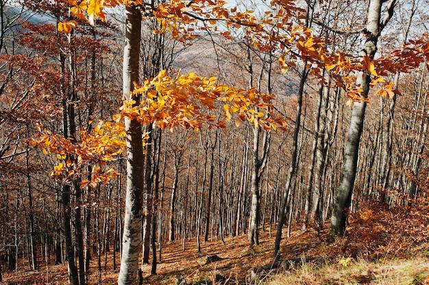 秋の森に黄色の赤い木の葉。カラフルな木