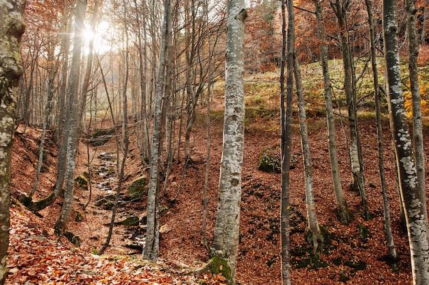 森の中の小川は、背景の太陽光と秋の森のトップダウンから流れます。