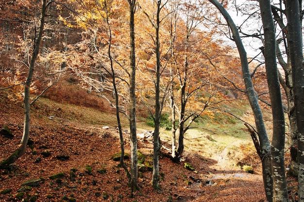 日光の木の上の石と赤い落ち葉の森。