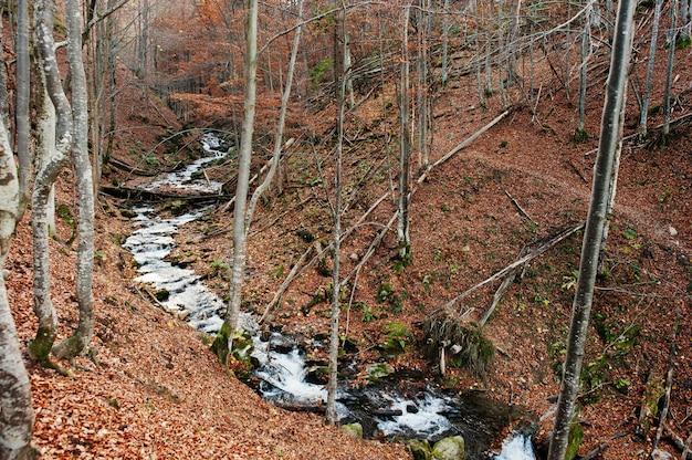森の中の小川は、背景の太陽光と秋の森のトップダウンから流れます。山川