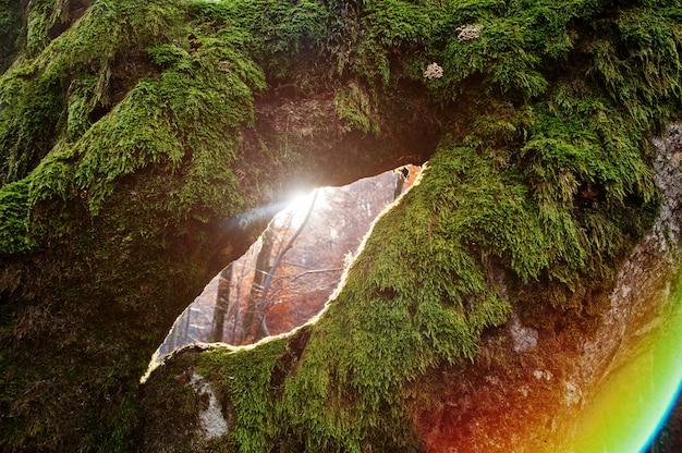 コケの木の日光のほうき穴の素晴らしいショット。サンシャインフルームツリー