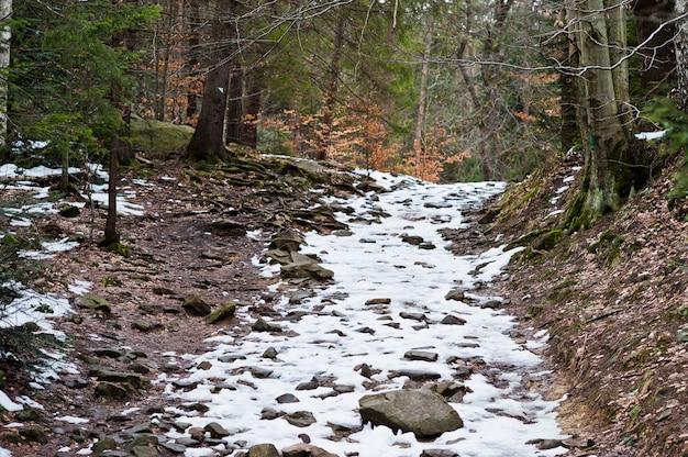 カルパティア山脈の小さな雪道で緑の森。