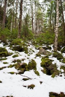 Довбуш скалы в снежном лесу в карпатах.