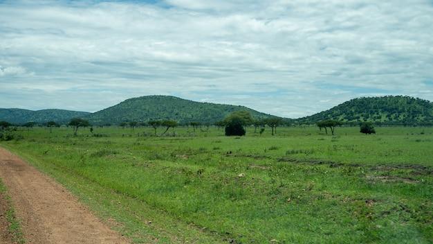 セレンゲティ国立公園のアフリカのパノラマ
