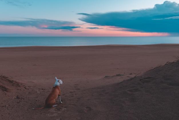 Очаровательная собака сидит и смотрит на красивый золотой закат у океана