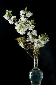 黒に咲く白い桜の小枝