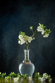 湿ったガラスの上に小さな枝がある花瓶の梅の地衣開花枝を持つ患者