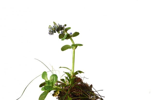 Зеленое растение со свежими изолированными листьями
