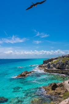 Карибский бассейн с чайкой