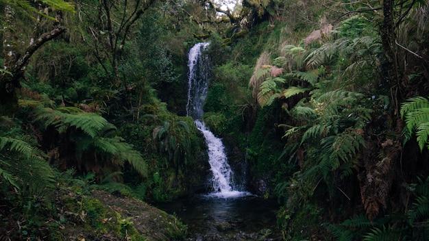 Водопад в форресте